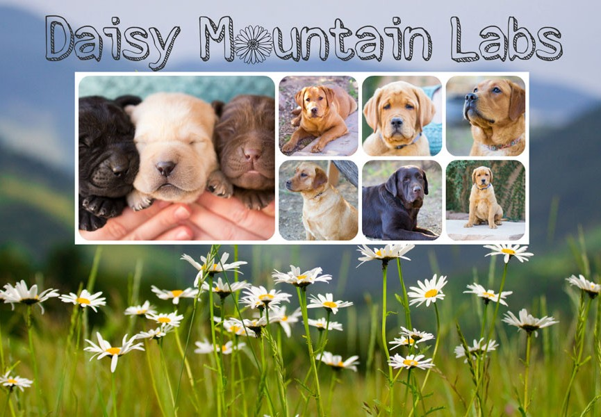 Daisy-Mountain-Labs-Logo-june-2015-copy